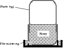 Honey Feeder