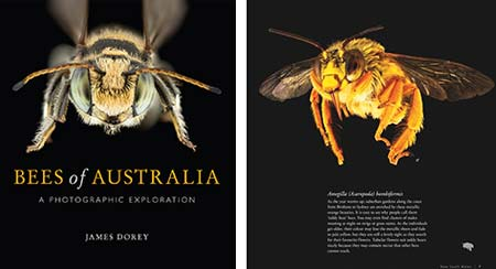 Bees of Australia by James Dorey