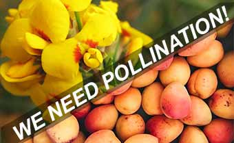 pollination is important
