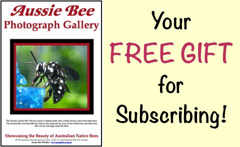 native bee ebook thank you gift