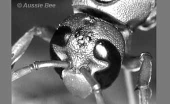 notched eye of a wasp